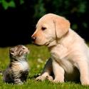 veterinarios, perros, animales de compañía