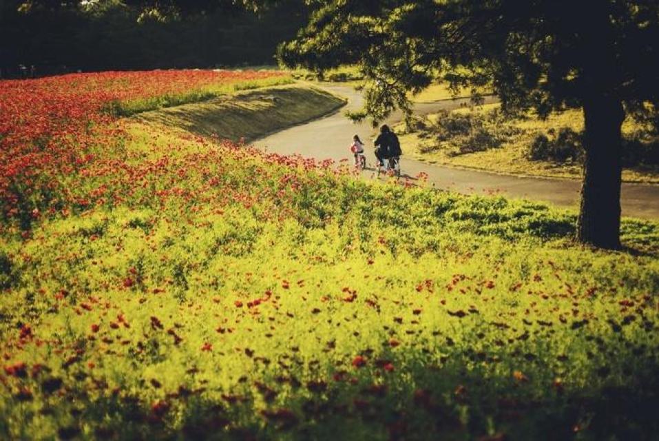 Khí hậu tại đây luôn trong lành mát mẻ, tạo điều kiện cho các loài hoa tỏa hương khoe sắc. Du khách có thể thuê xe đạp chạy quanh những con đường hoa tuyệt đẹp. Ảnh: Zhao!