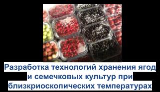 Разработка технологий хранения ягод и семечковых культут при близкриоскопических температурах
