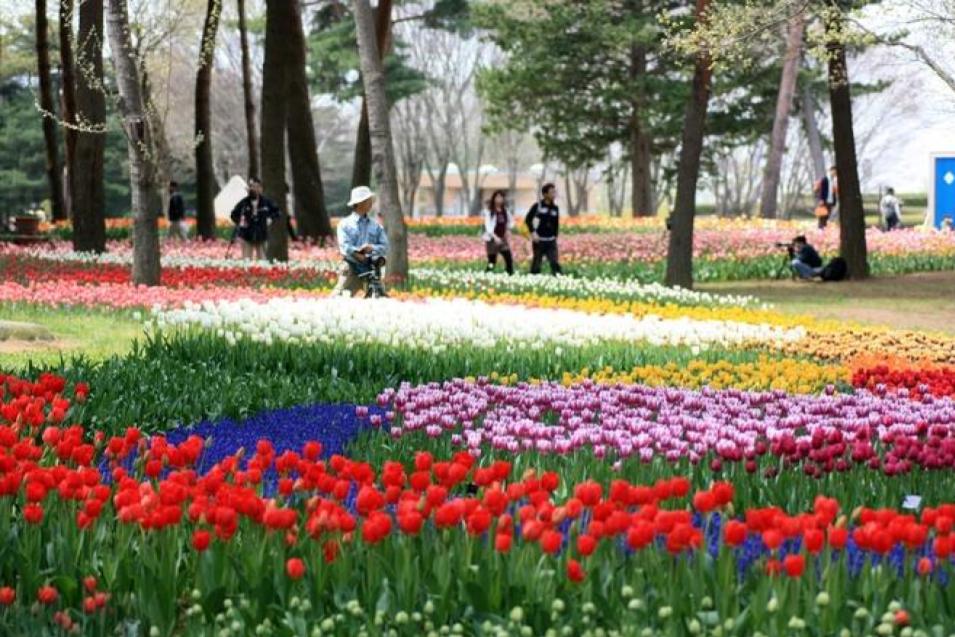 Với diện tích hơn 3,5 ha, công viên Hitachi luôn đẹp rực rỡ bởi những cánh đồng hoa nở rộ quanh năm. Ảnh: Macky