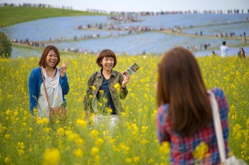 Công viên Hitachi Seaside, nằm ở Hitachinaka, tỉnh Ibaraki, Nhật Bản, bên cạnh bãi biển Ajigaura, là một công viên đầy hoa và là điểm đến du lịch nổi tiếng. Ảnh: Aeschylus18917