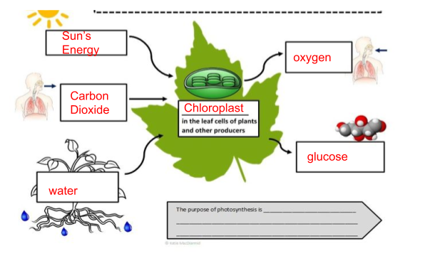 Elodea Photosynthesis Lab Partial Key Google Docs
